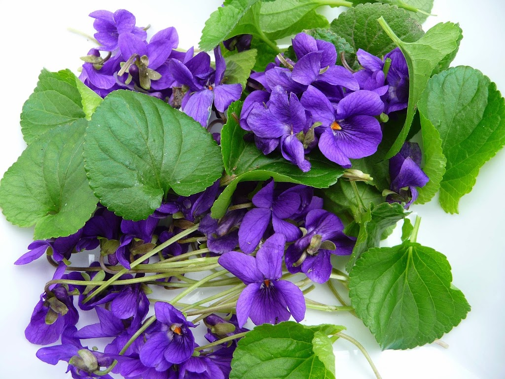 Violette-1