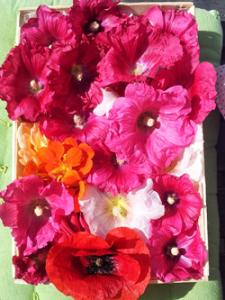 Cours de cuisine de fleurs entre amies avec Expérigoût